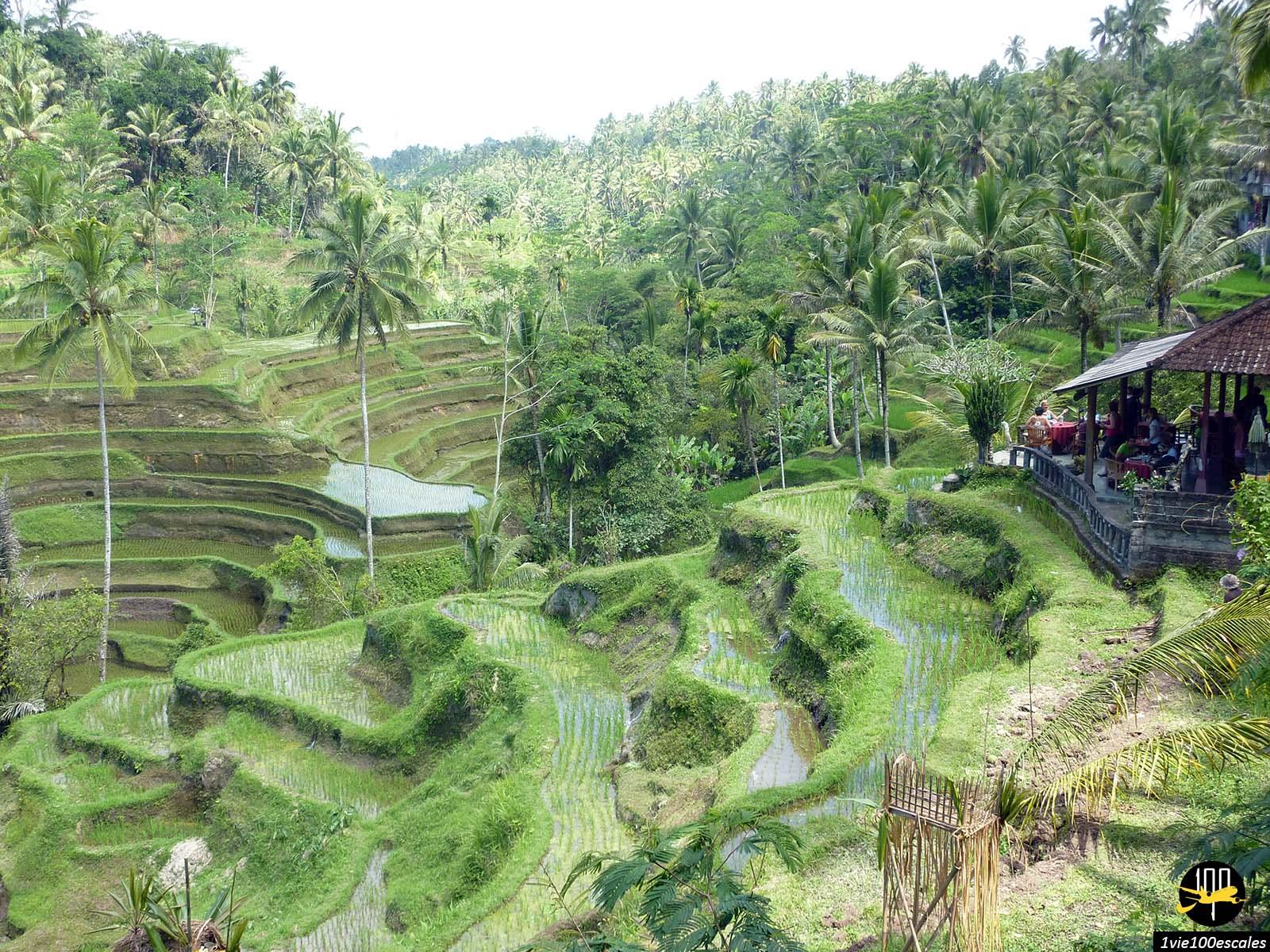 Escale #034 Bali