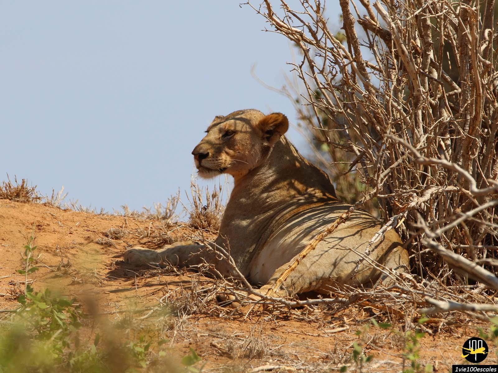 Escale #097 Parc national de Tsavo East