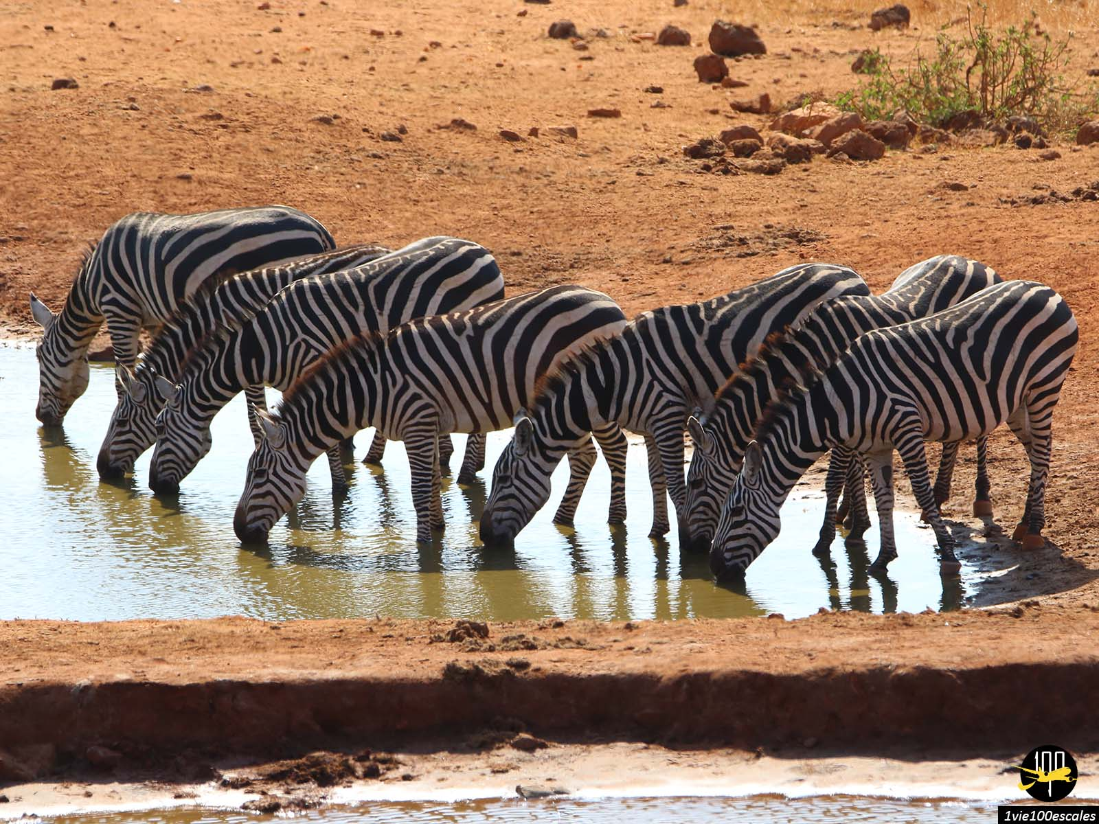 Escale #099 Parc national de Tsavo West