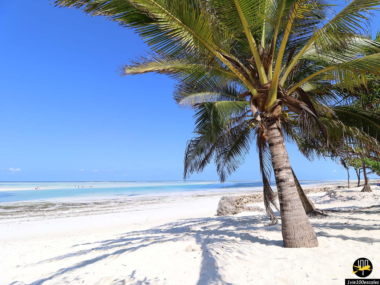 Escale #100 Zanzibar