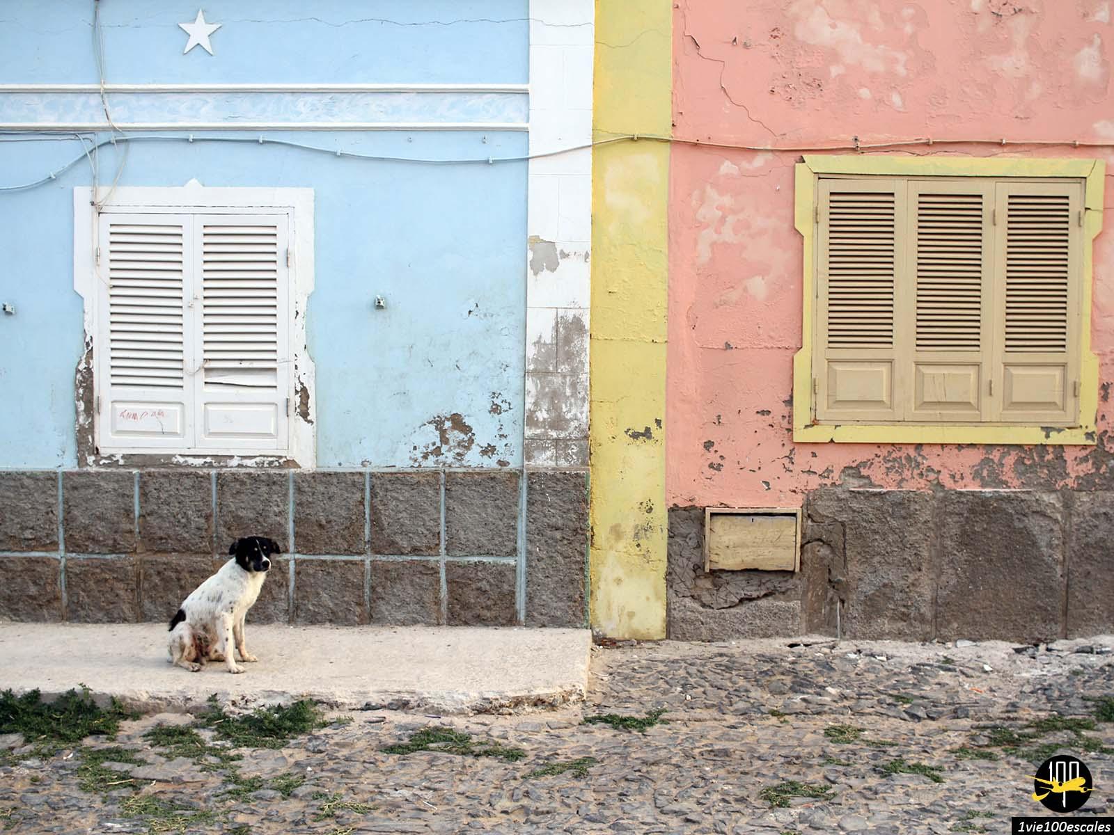 Un chien devant des maisons colorées à Sal Rei sur l'île de Boa Vista