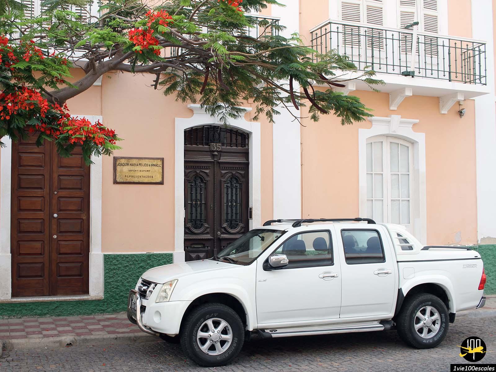 Les beaux arbres fleuris dans les rues de Mindelo sur l'île de Sao Vicente