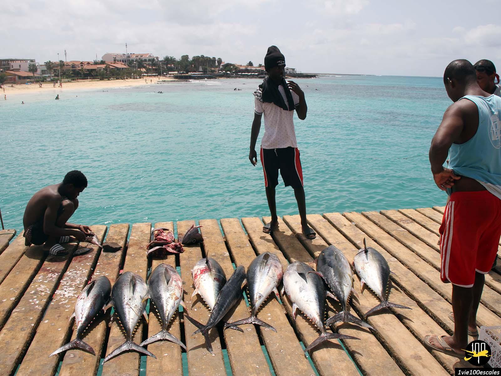 La présentation de la pêche du jour à Santa Maria sur l'île de Sal