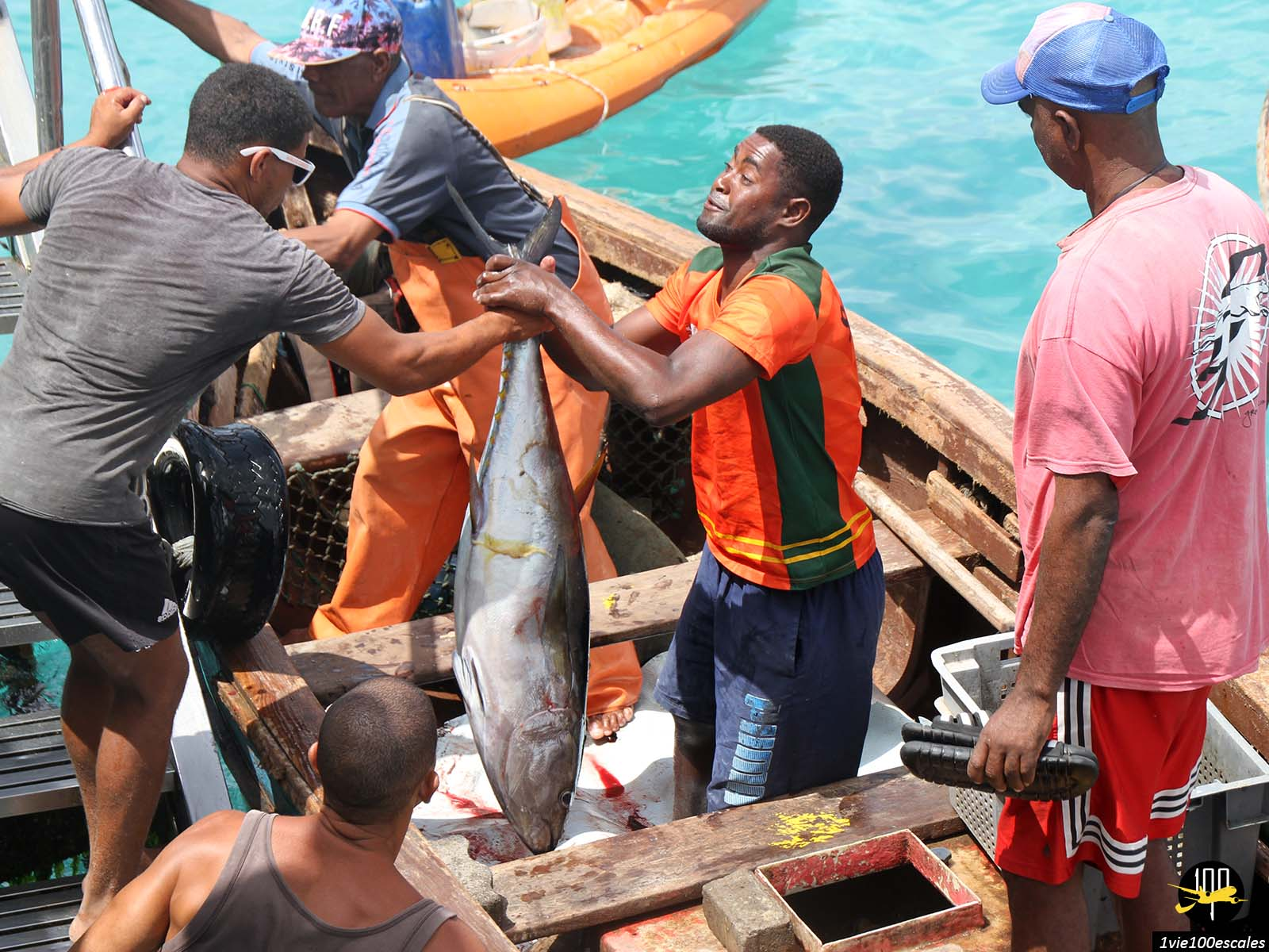 La sortie des gros poissons pêchés dans la matinée à Santa Maria sur l'île de Sal