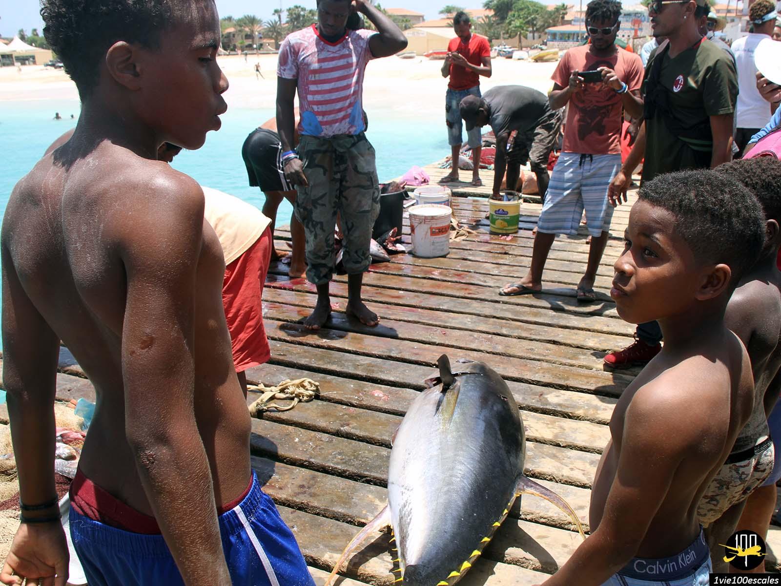 Les enfants qui admirent les gros poissons pêchés à Santa Maria sur l'île de Sal