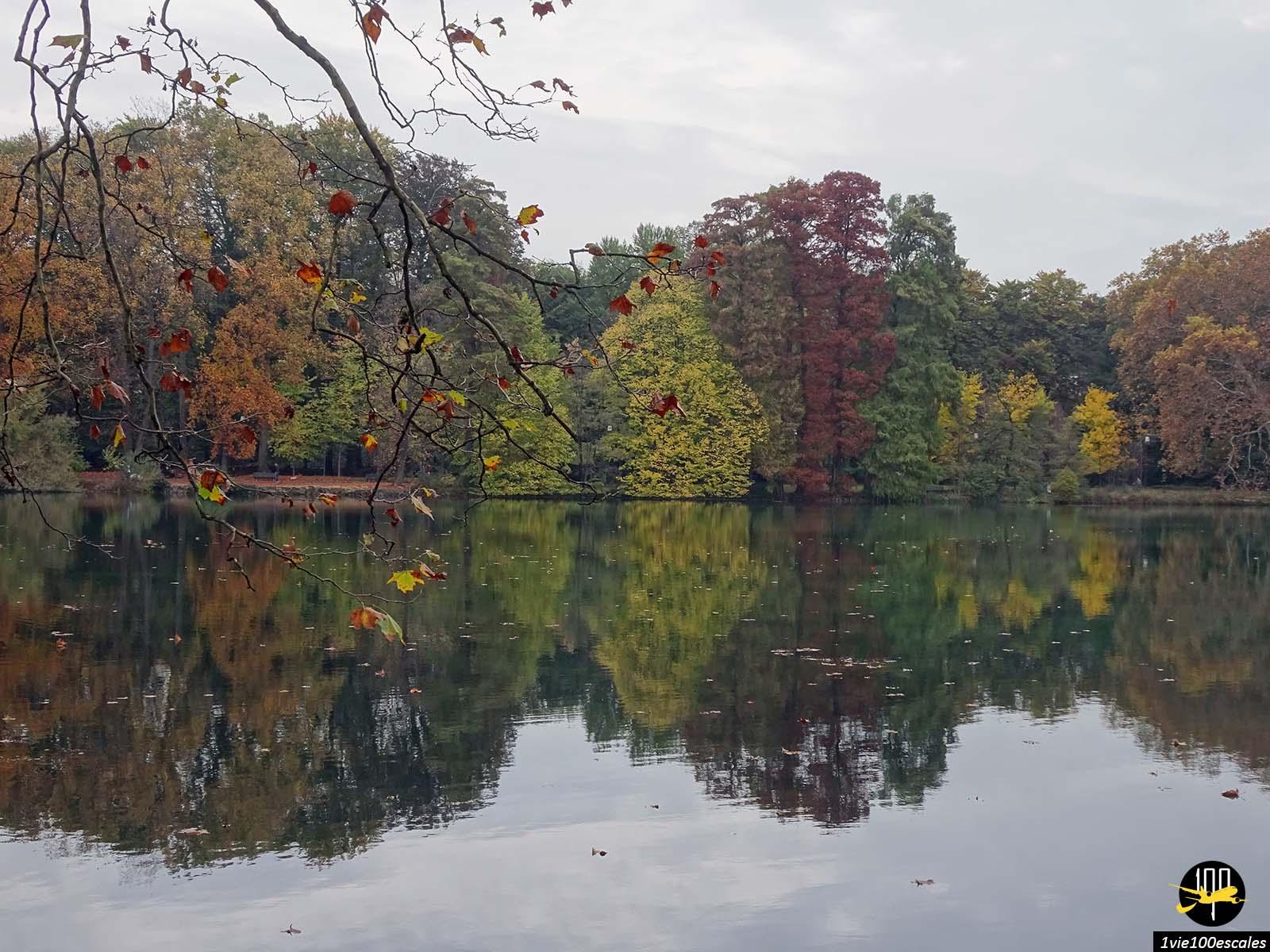 Les arbres du Parc de la Tête d'Or à Lyon avec ses couleurs d'automne