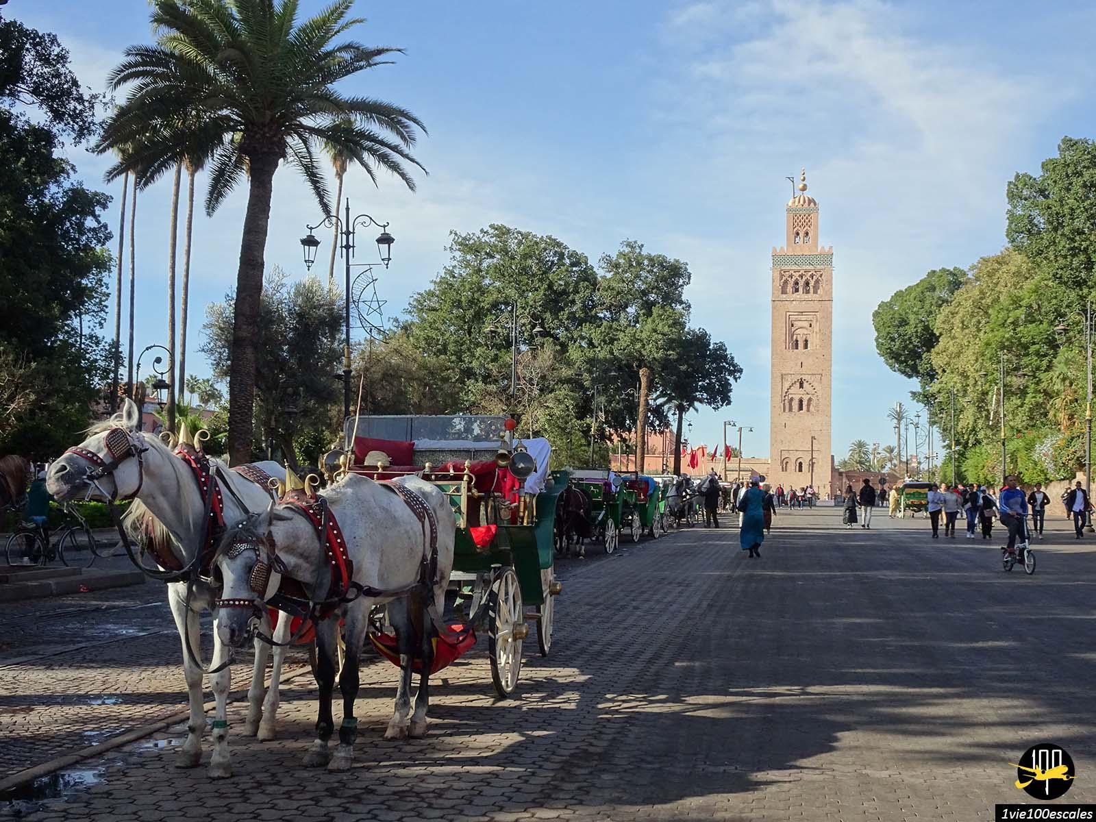 Escale #137 Marrakech