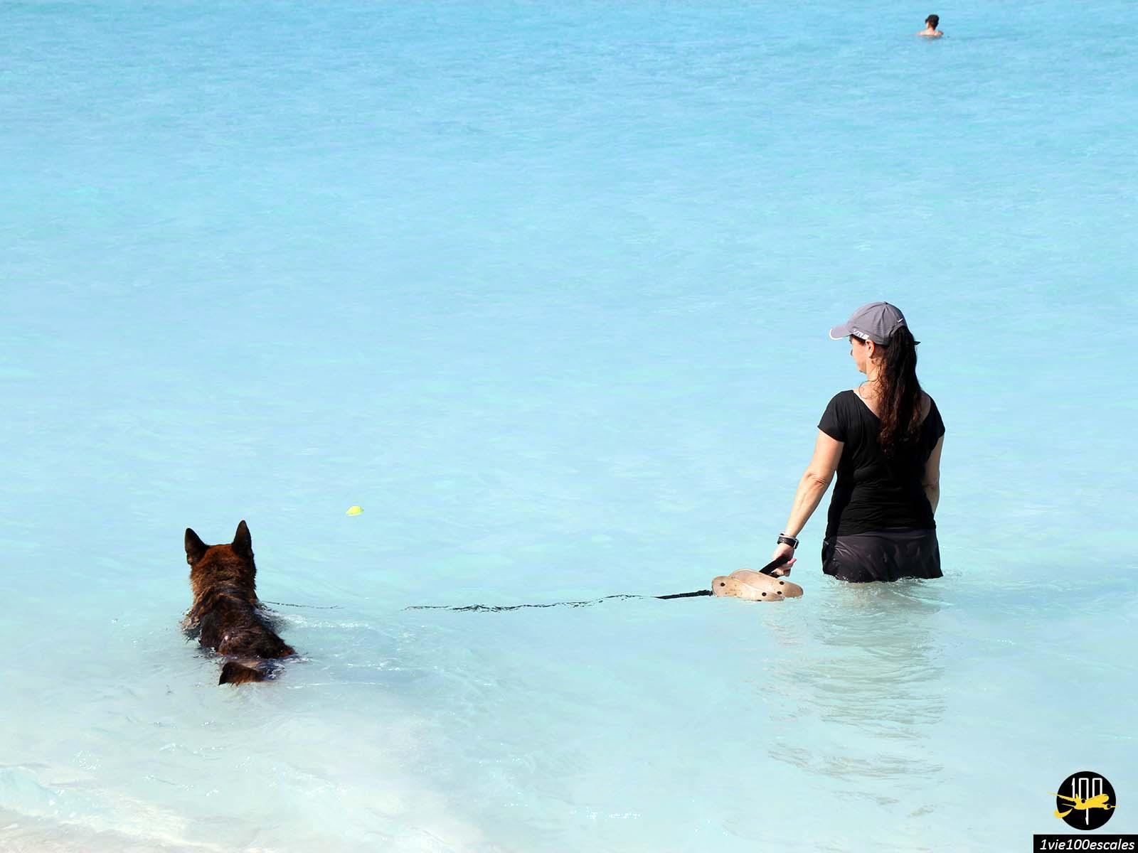 Les animaux sont les bienvenues sur les plages de Varadero